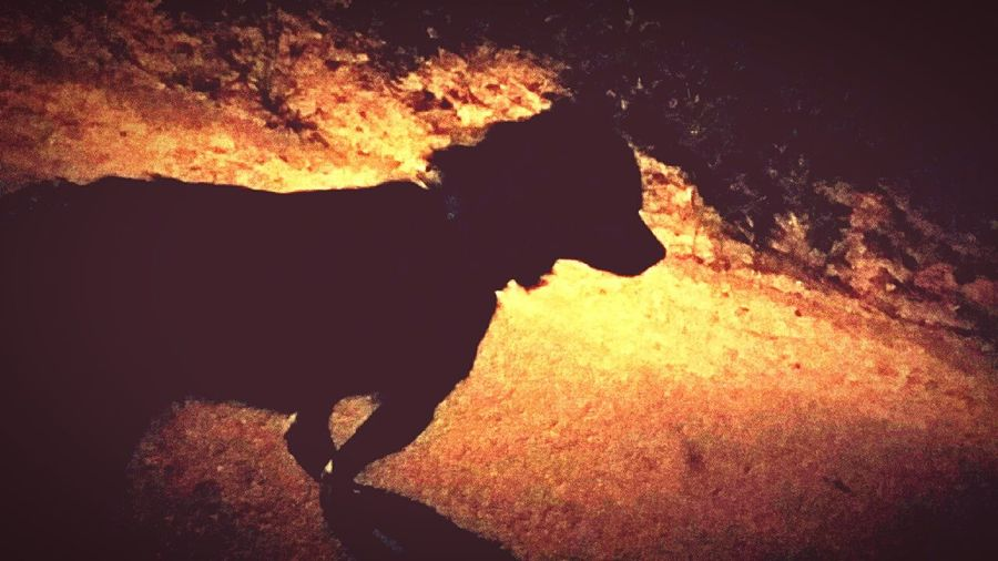 Night Dark Dark Dog  Black View Street Lights Street Life Rambo Little Guy He Is The Best Street Dog Lucky Guy So Smart I Love This Dog So Much :) Some Place