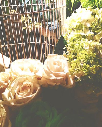 Flowers in Wedding Party Flowers Hobbies Weddingparty Decoration WhiteRoses Bouquets Flora Fnpict