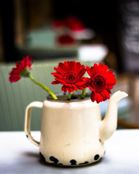 Close-Up Of Fresh Red Flowers In Vase On Table
