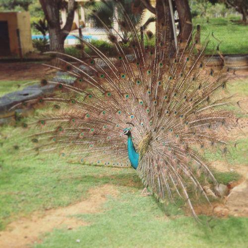 Animales Animals Belleza Naturaleza Barrera Carabobo Venezuela