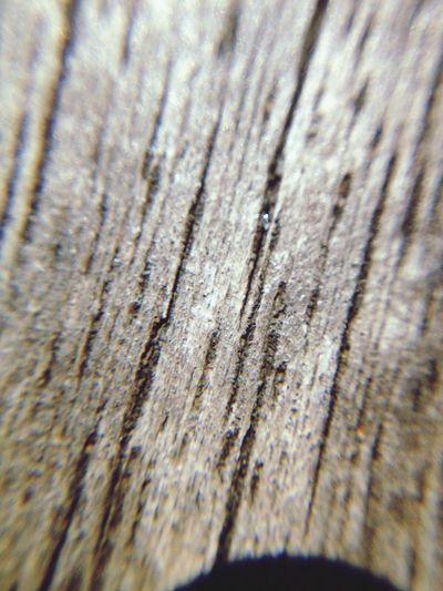 Wood Macro Photography