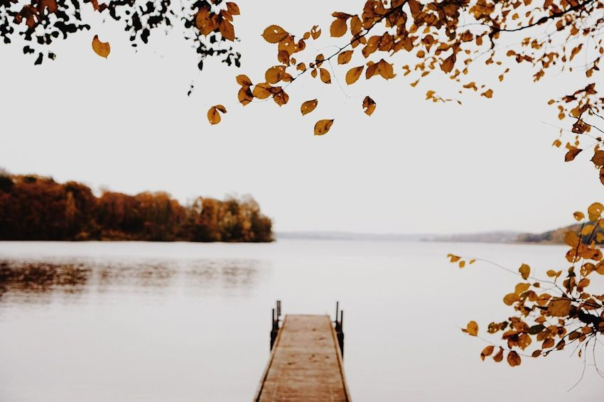 EyeEm Selects The Week On EyeEm Tree Beauty In Nature Nature Nature_collection Colour Of Life Real Photography Colorful Autumn Colors Lake Beauty In Nature Outdoors Nature In The City Landscape Water Sky Scenics Fragility Tree Nature Autumn Leaf Forest