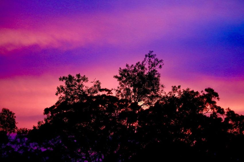 A photo of a sunset in the local area Beauty In Nature Cloud - Sky Colour Dusk Enjoying Life Evening Growth Idyllic Landscape Low Angle View Nature Pink Color Purple Scenics Silhouette Sky Sunset Sunset, Tranquil Scene Tranquility