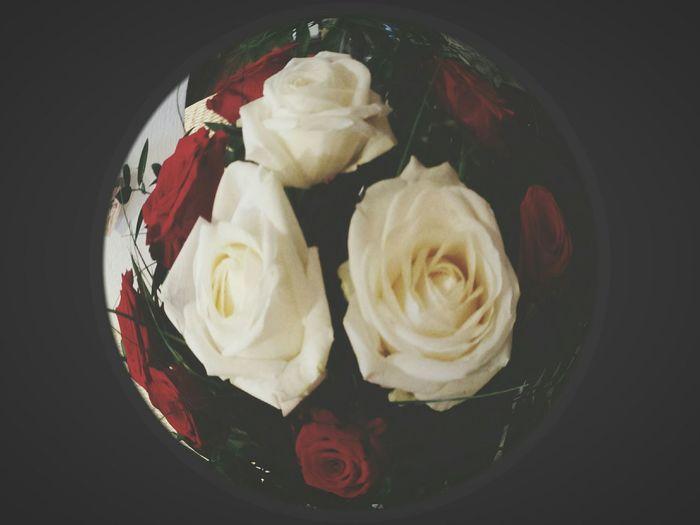Roses White Roses Red Roses