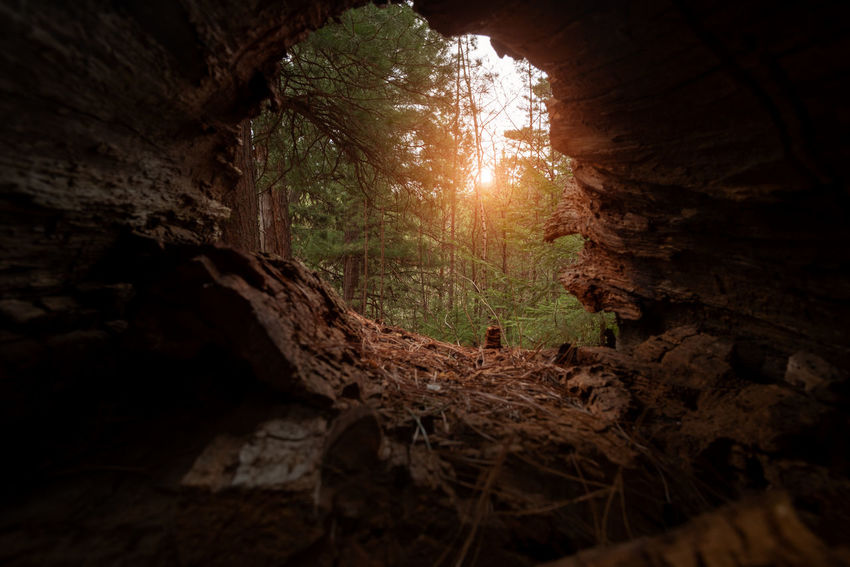 Architecture Beauty In Nature Cave Day Forest History Land Low Angle View Nature No People Outdoors Plant Rock Rock - Object Rock Formation Solid Sunlight Tranquility Tree