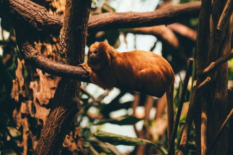 View of a monkey on tree