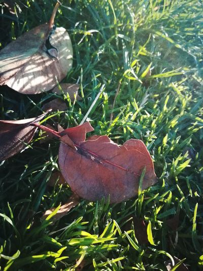 Leaf Outdoors No People Day Nature Green Color Growth Plant Grass Close-up Animal Themes F4F Professional L4l P10lite Chilegram Beauty In Nature Santiago Nature Picoftheday Life Fotography Sun Pretty Live