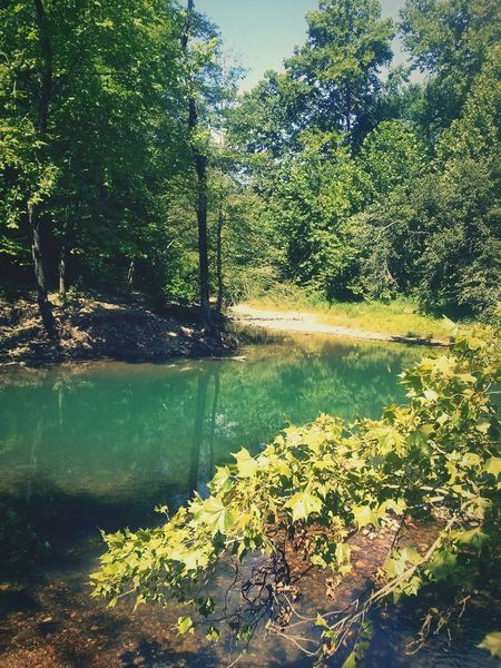 Nature On Your Doorstep At a creek close to my house The Great Outdoors - 2017 EyeEm Awards