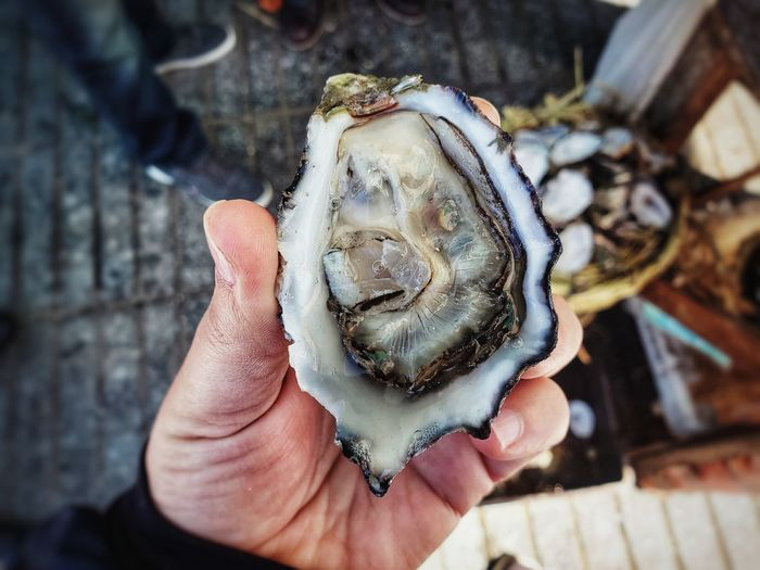 Close-up view of a hand holdibg a fresh oyster