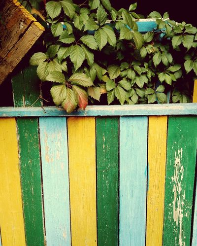 Green Color Outdoors Day No People Plant Leaf Growth Ivy Built Structure Close-up Architecture Building Exterior Nature Freshness Детский сад Paint The Town Yellow