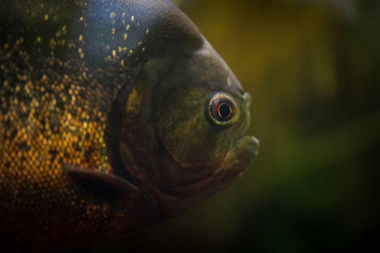 Close-up of bird in aquarium