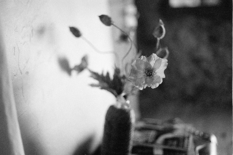 Grain Black And White Film Analogue Photography Flower EyeEm Selects Day Close-up No People Portrait The Still Life Photographer - 2018 EyeEm Awards