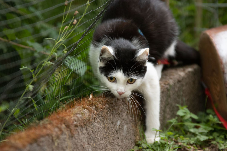 Animal Animal Themes Mammal Domestic Domestic Cat Cat Feline One Animal Pets Vertebrate Domestic Animals Portrait Looking At Camera Day No People Kitten Nature Whisker Plant Selective Focus Outdoors