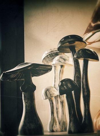 Autumn Hongos  Mushrooms 🍄🍄 Nature Setas Autumm Fruits Brown Champignons Decoration