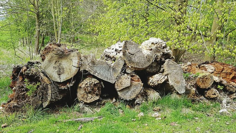 Log Pile Wood - Material Day Outdoors No People Sunlight Nature Grass Green Color Nature Morbid Beauty