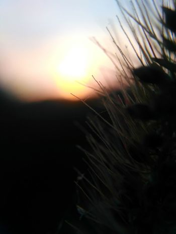 Sunset Nature Macro Sun Beauty In Nature Rural Scene Close-up Summer Backgrounds Cereal Plant Agriculture Growth Uncultivated Beauty Sunlight Wheat Plant Outdoors Scenics No People