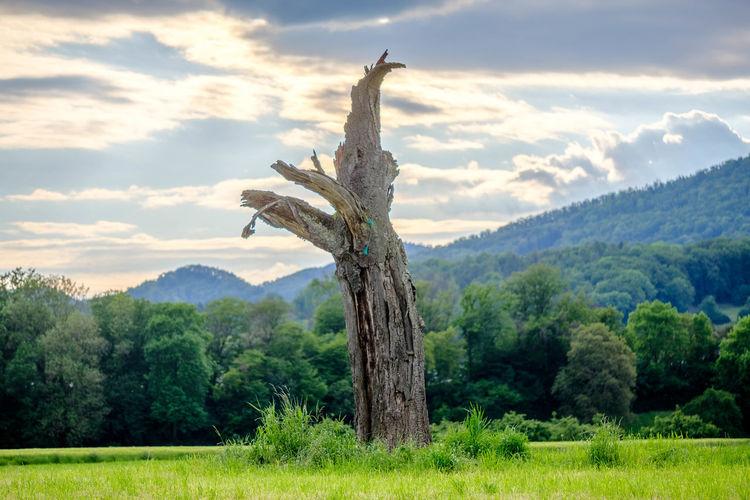 Dead Tree Tree