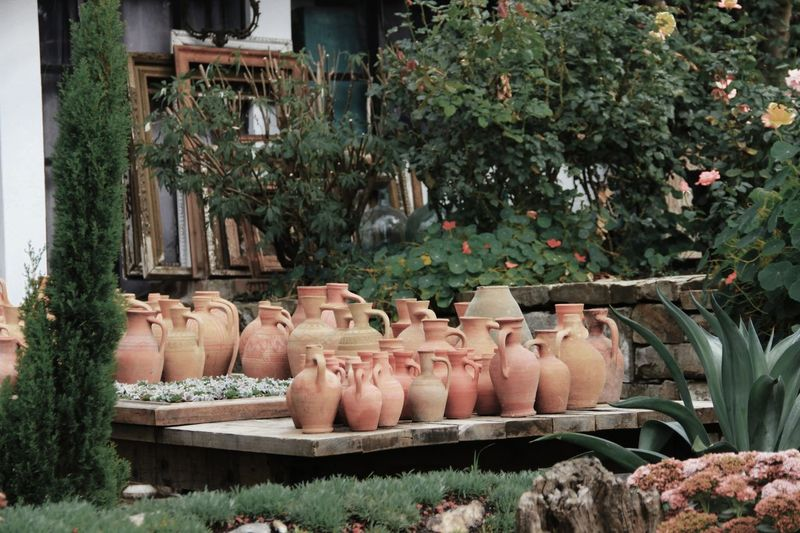 View of pot and plants in row