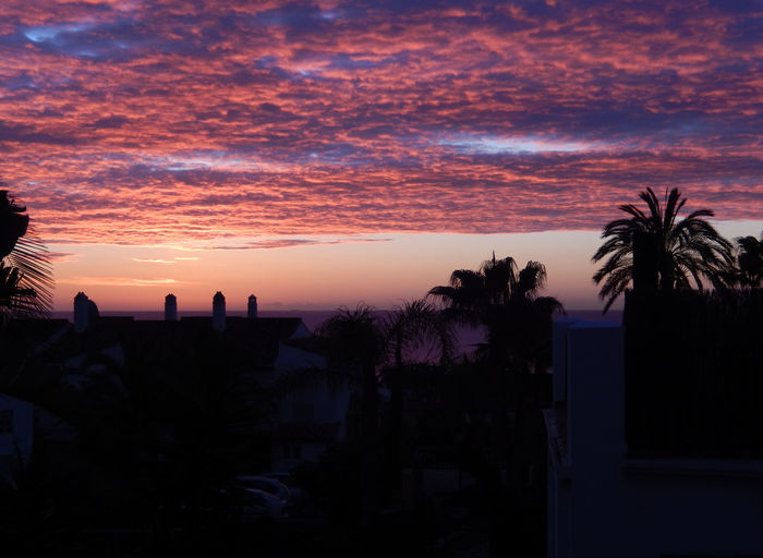 Magnificent sunrise over the Med Atmosphere Atmospheric Mood Cloud - Sky Clouds At Sunrise Dramatic Sky Horizon Over Water Majestic Moody Sky Orange Color Outdoors Outline Palm Tree Red Clouds Red Sky Red Sky Sunrise Scenics Sea Silhouette Sky Sun Sunrise Sunrise Clouds Sunrise Red Sky Tranquil Scene Tropical Climate