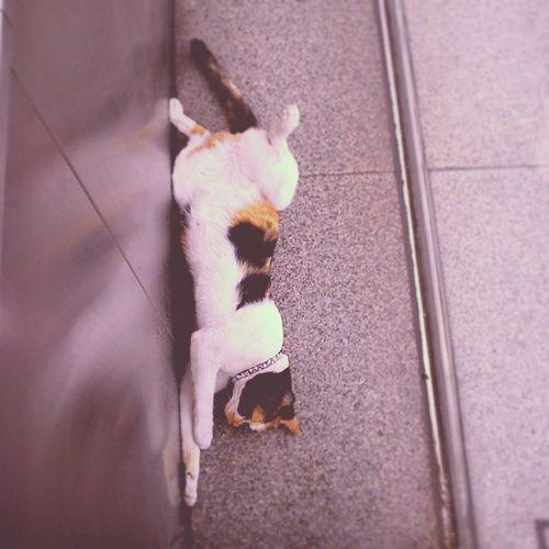 เป็นแมวเปิดเผยมาก มากไปมั้ย Cat Neko แมวใต้ดิน สถานีเพชรบุรี