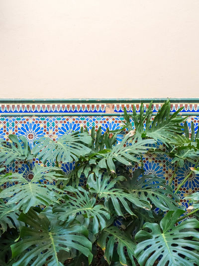 Arabic Architecture Close-up Day Freshness Growth Leaf Leafs Nature No People Outdoors Plant SPAIN Tile Wall