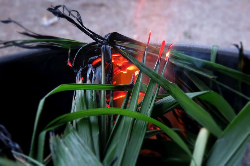 Beauty In Nature Citronella Close-up Fire Flame Focus On Foreground Fragility Freshness Green Green Color Insect Insects  Leaf Leaves Nature No People Outdoors Plant Red Rural Scene Selective Focus Springtime Vibrant Color Warmth Warmthandsunshine