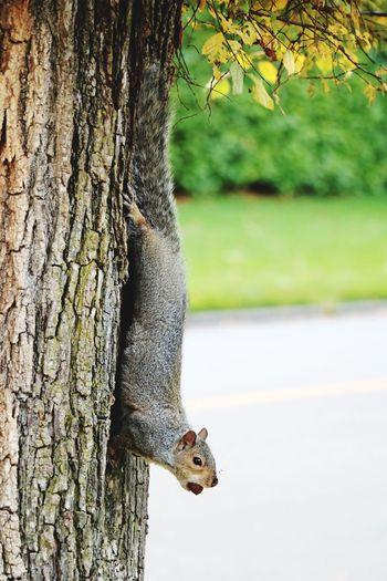 Weasel on tree trunk