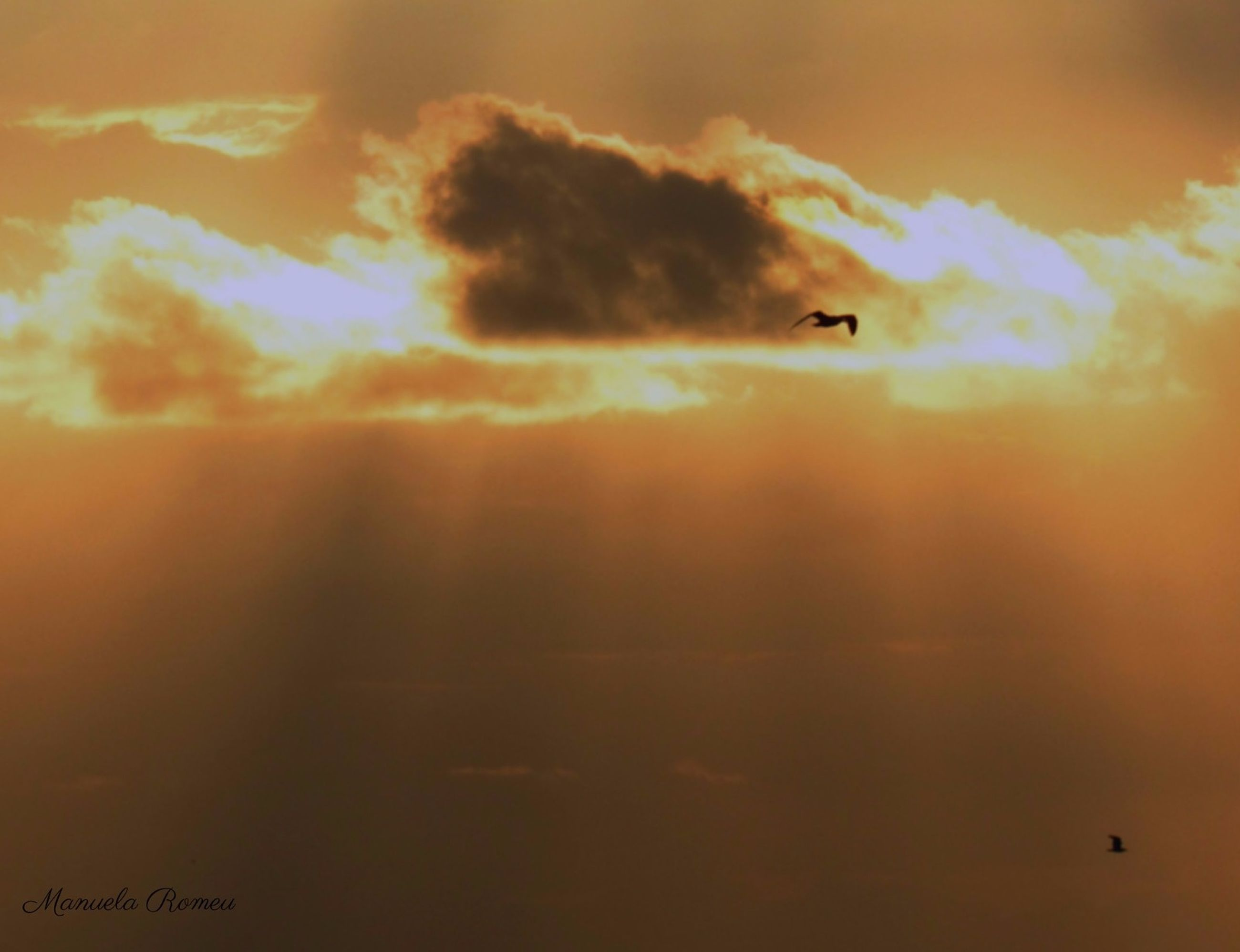 sunset, flying, orange color, sky, cloud - sky, scenics, sun, mid-air, beauty in nature, low angle view, bird, nature, tranquility, silhouette, tranquil scene, idyllic, cloudy, cloud, dramatic sky, outdoors