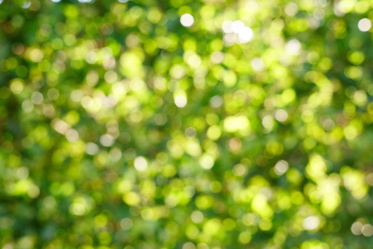 Abstract Abstract Backgrounds Backgrounds Bright Day Defocused Full Frame Green Color Illuminated Light - Natural Phenomenon Nature No People Outdoors Plant Sunlight Tranquility