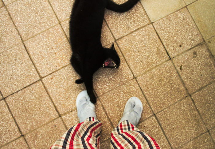black cat yawning at my feet. Animal Themes Black Black Cat Black Color Cat Domestic Animals Feet Holiday Lazy Legs Looking Down Man One Animal Pets Pijama Relaxation Relaxing Time Sitting Yawning Cat