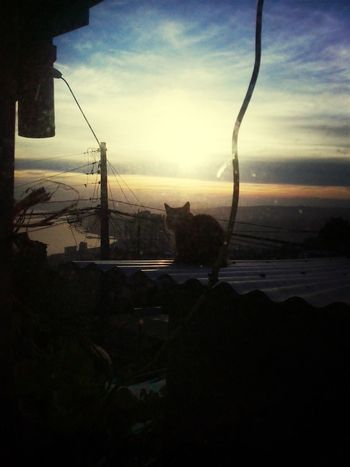 Cat♡ Cat Watching Morning Dawn Valparaíso