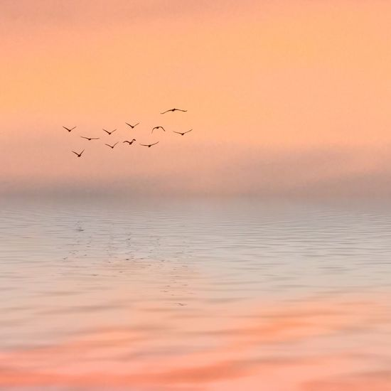 Tranquil Scene Pastel Power Pastel Colors Tranquilo (: Tranquil Ocean Horizon Over Water Daylight Birds Landscape Landscape_Collection Landscape_photography Beautifully Organized Miles Away Minimalist Architecture Long Goodbye The Secret Spaces The Great Outdoors BYOPaper! Non-existent Place