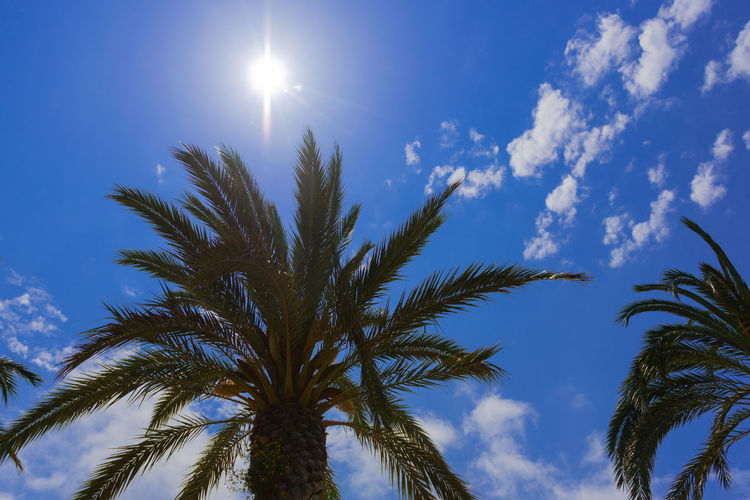 Balearic Islands Baleares Mallorca SPAIN Summer Summertime Holiday Blue Blue Sky Sky Nature No People Outdoors Scenics - Nature Tranquility Plant Low Angle View Tree Growth Palm Tree Tropical Climate Cloud - Sky Beauty In Nature Sunlight Leaf Sun Palm Leaf Moon Tropical Tree Moonlight