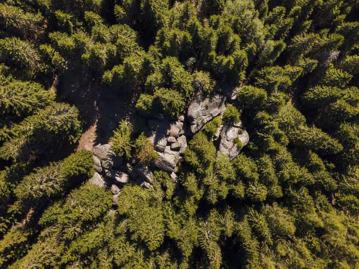High angle view of a forest