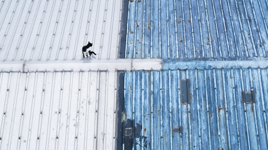 High Angle View Of Cat On Roof