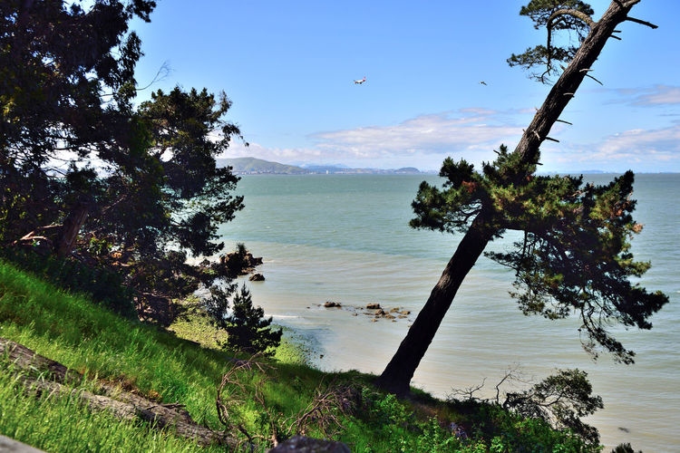 Coyote Point 1 Hiking ❤️ Hiking Adventures Coyote Point Park Hiking Trails San Francisco Bay Eucalyptus Grove Island Nature Beauty In Nature Nature_collection San Francisco Bay Trail Landscape_Collection Landscape_photography WoodLand Final Approach To SFO Hillside Trees Sky And Clouds Scenic Bird Water Flying Sky Horizon Over Water