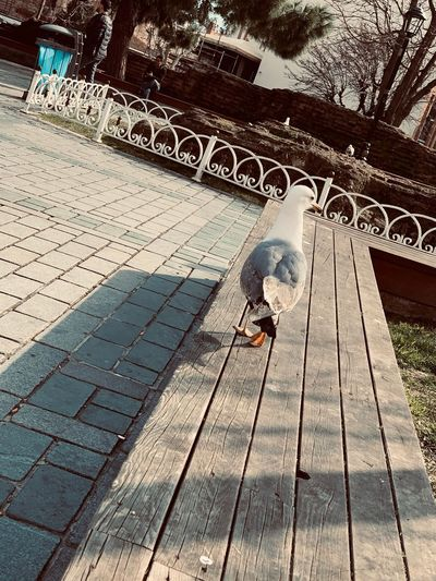 Day No People Communication Outdoors Metal Footpath Sign Sunlight Safety Protection Architecture Text Nature Security Street Built Structure Water City High Angle View