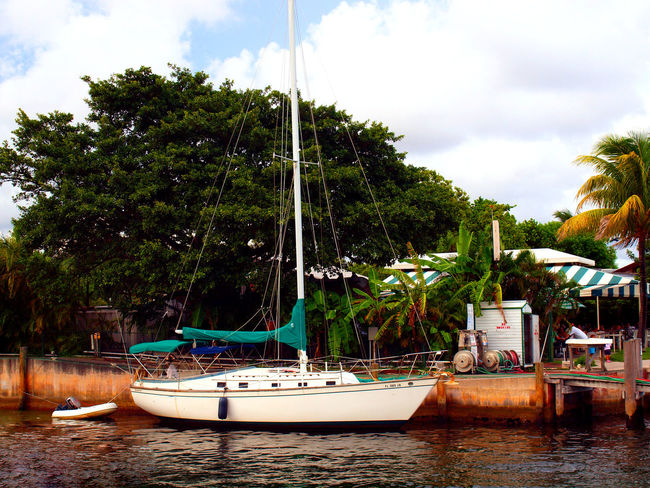 Yacht Palm Tree Palms Yacht Sailboat Sea Ocean EyeEm Best Shots EyeEmNewHere Barge Hello World Oceanview Tree Water Nautical Vessel City Moored Sky Cloud - Sky