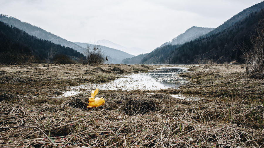 Stopover at Wiestalstausee Dürer Feldhase Grass Mountainview Rabbit Rabbits Yellow