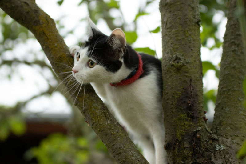 Animal Themes Tree Animal Mammal One Animal Plant Domestic Cat Feline Domestic Cat Pets Domestic Animals Vertebrate Branch Tree Trunk Focus On Foreground Trunk Day No People Nature Whisker