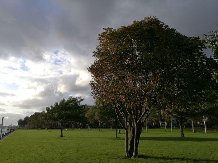 Bush Tree Cloud