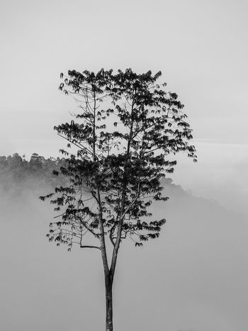 Lone Tree Black & White Black And White Landscape Foggy Weather Beauty In Nature Black And White Blackandwhite Blackandwhite Photography Branch Clear Sky Day Fog Foggy Foggy Day Foggy Landscape Foggy Morning Growth Landscape Lone Nature No People Outdoors Sky Tree