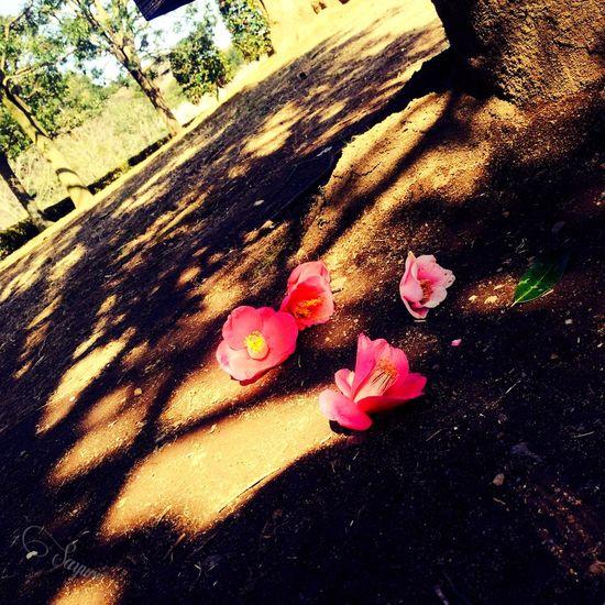 偕楽園 Photography Cute Flowers Pink New Japan Photography Green Spring Flowers