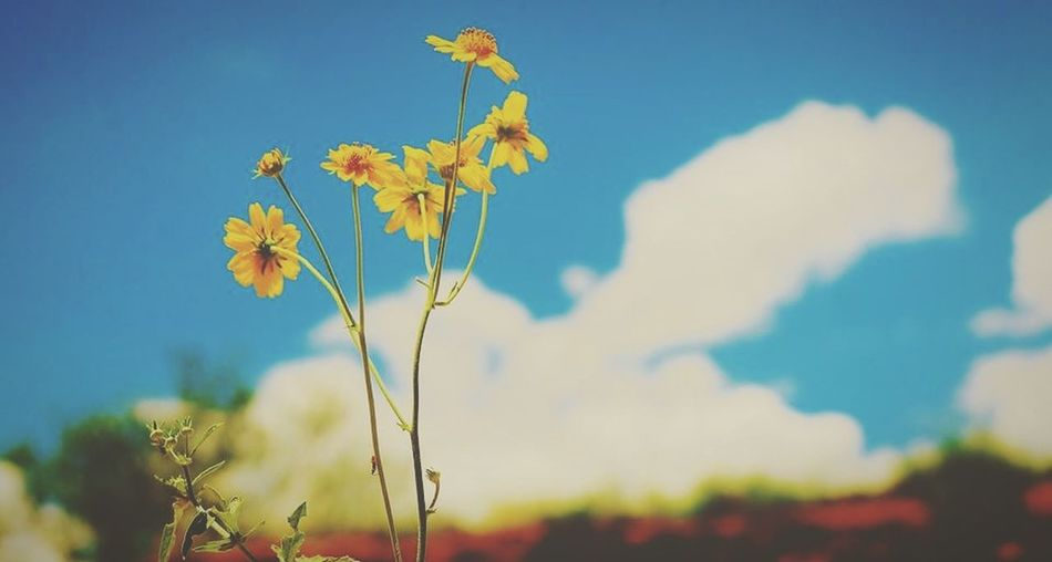 Flowers EyeEm Nature Lover Nature Sky Japan Okinawa Road Green Clouds And Sky