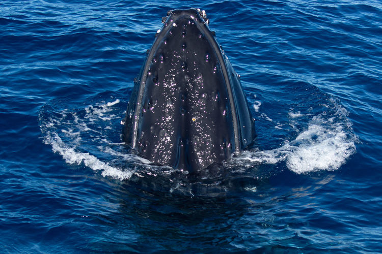 View of whale