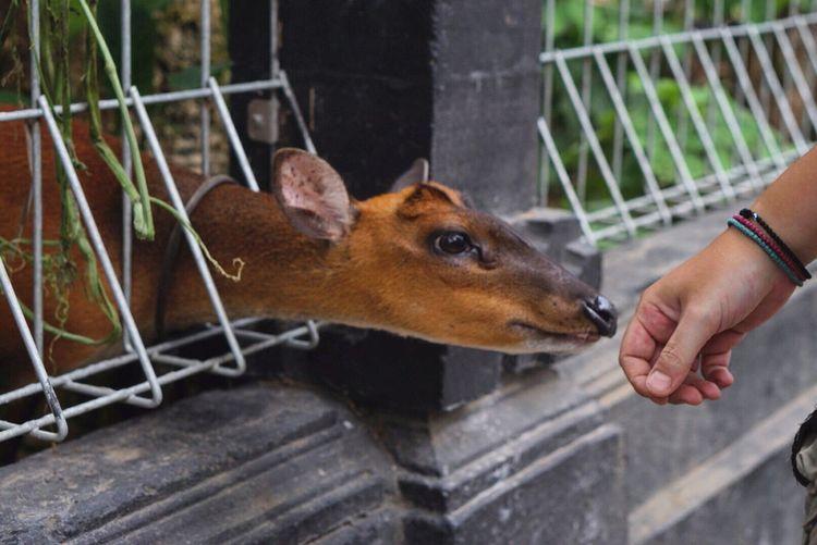 Deer Smelling Hand