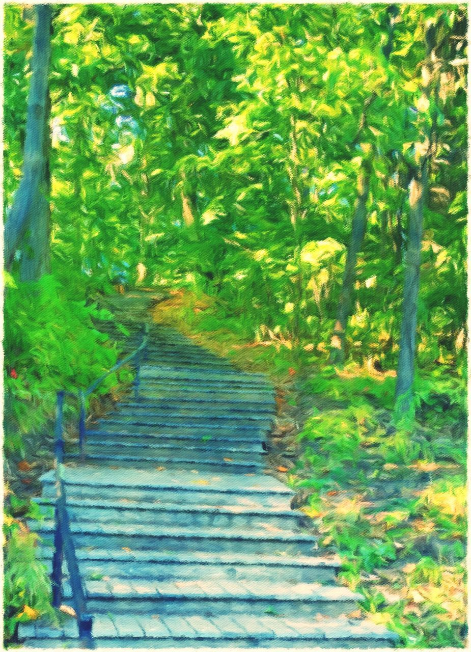 steps, the way forward, steps and staircases, growth, nature, green color, staircase, tree, day, outdoors, no people, beauty in nature, grass