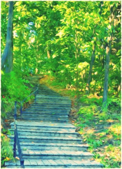View of staircase in forest