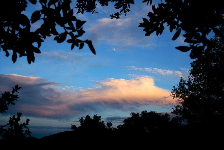 Sunset, Tarragona, Spain. Beauty In Nature Cloud Cloud - Sky Countryside Frame Framed Horizontal Moon Nature No People Outdoors Peace Quiet Tranquility Sky Sunset Tarragona, España Tree Treetop