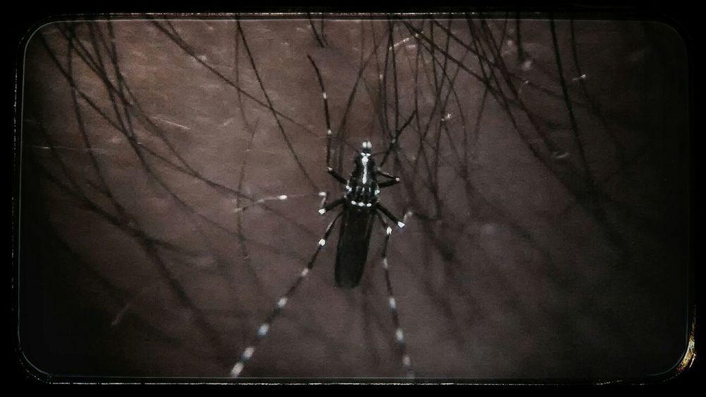 Is Hate too strong a word 😬. Hidden Danger Dark Fairytale Heroes & Villains My Macro Shot Eeekit Nature X😨w😦x